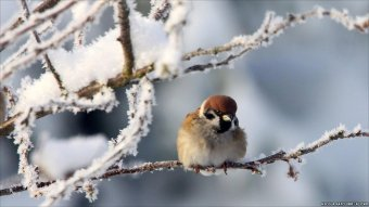 sparrow-in-the-cold-winter